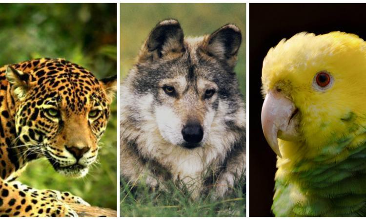 Amenazas latentes para los animales en peligro de extinción | El Imparcial de Oaxaca