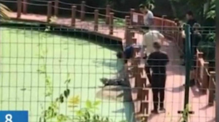 Turista chino patea a cocodrilo en peligro de extinción 'para que se mueva' | El Imparcial de Oaxaca