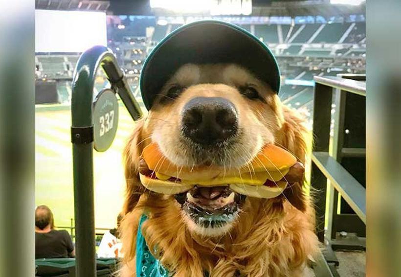 Video: Perro obediente conquista redes al tomarse foto con hotdog | El Imparcial de Oaxaca