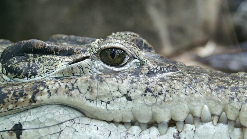 Video: Joven patea a cocodrilo en peligro de extinción para que se mueva | El Imparcial de Oaxaca