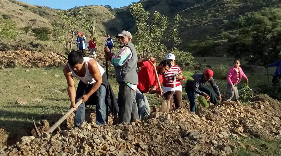 Continúa reforestación  en Huajuapan de León, Oaxaca