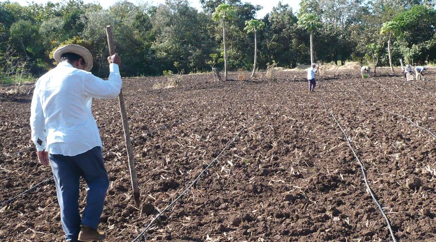 Entregan semillas a los comuneros de Pochutla, Oaxaca | El Imparcial de Oaxaca
