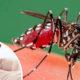 Reportan 190 casos de dengue en Choápam
