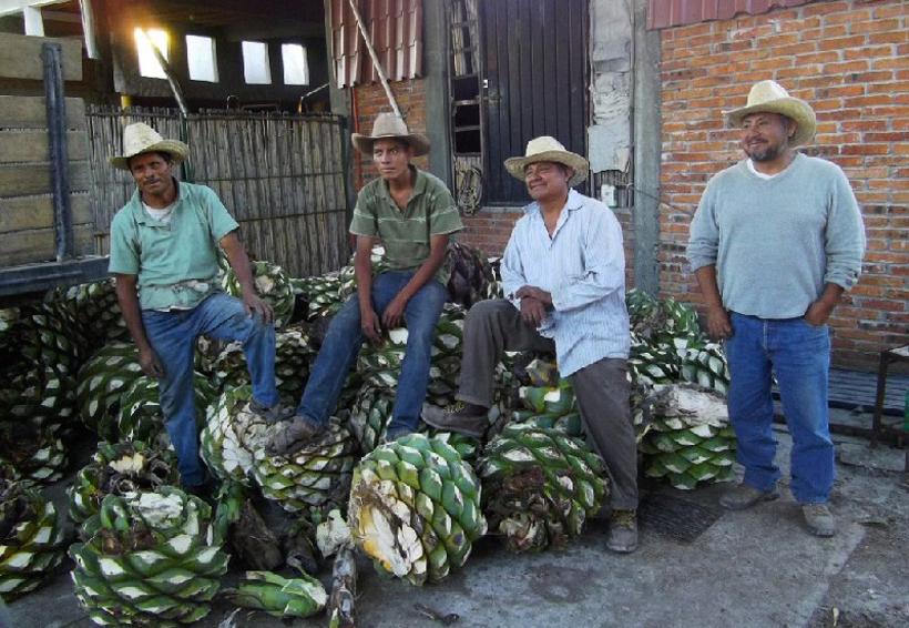 Interpondrán mezcaleros juicio de  nulidad contra ampliación de DOM | El Imparcial de Oaxaca
