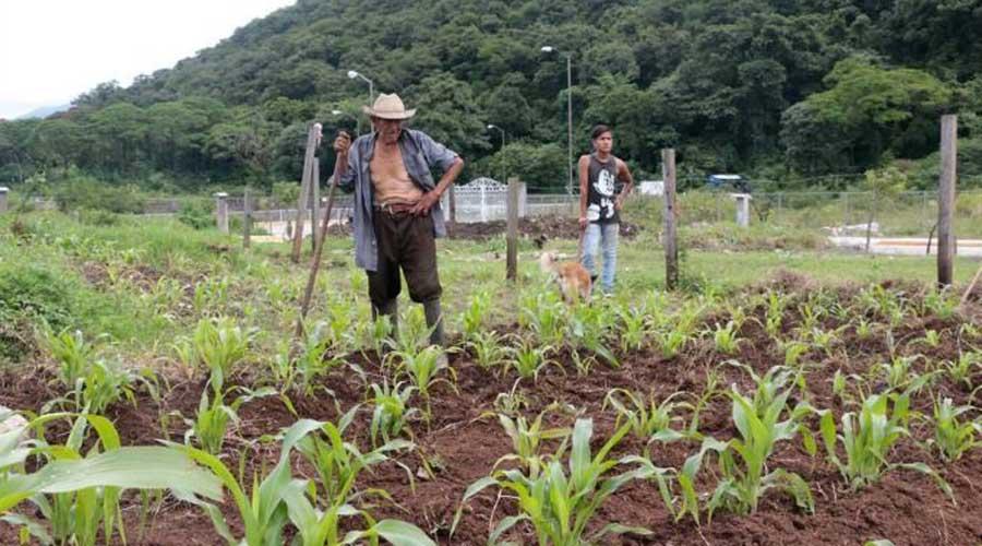 Lluvias benefician a  campesinos de Valles  para el autoconsumo | El Imparcial de Oaxaca