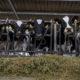 Canadá tiene una 'moneda de cambio' en la renegociación del TLCAN: sus lácteos