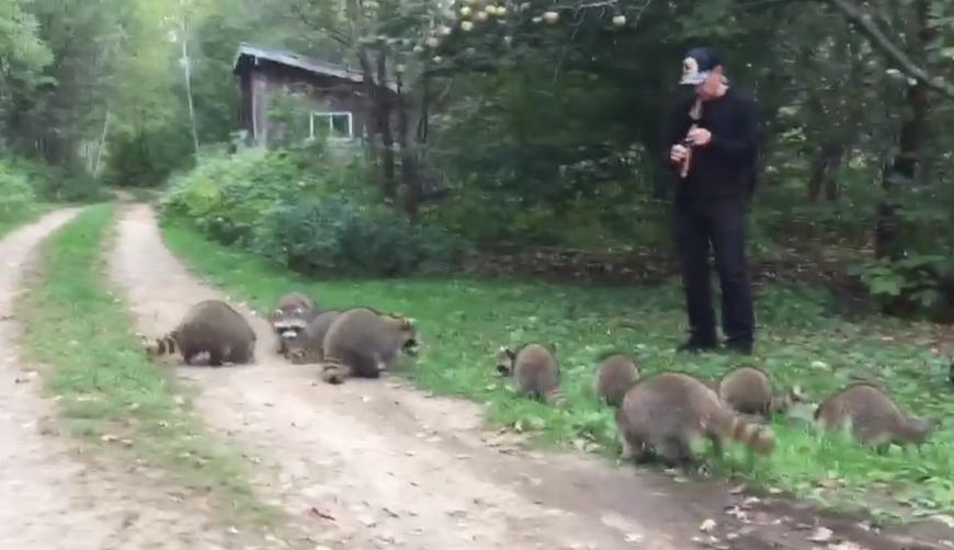 Furor por el encantador de mapaches en Nueva York