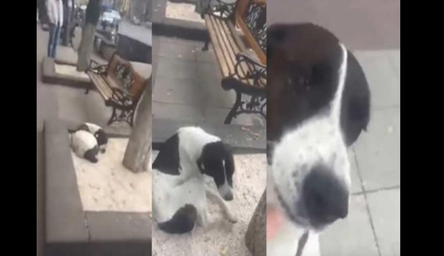 Video: Perrito llora de emoción al reencontrarse con su amo tres años después | El Imparcial de Oaxaca