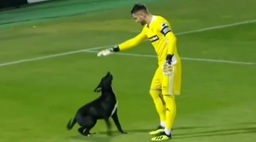 Un perro invade la cancha y paraliza durante varios minutos un partido de fútbol | El Imparcial de Oaxaca