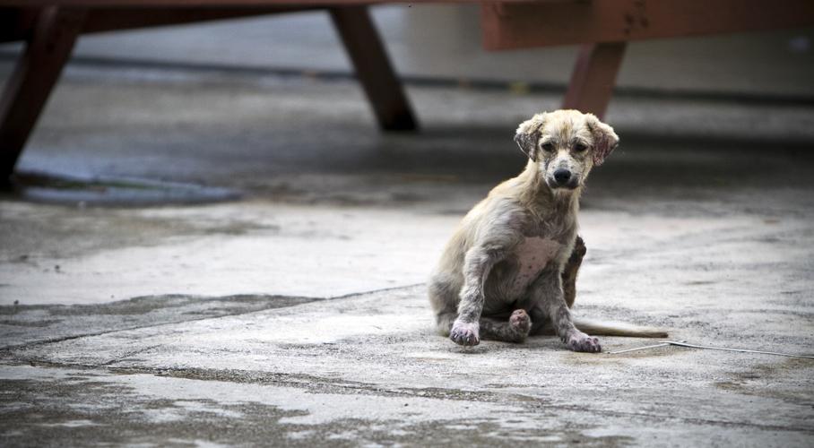 Falta cultura para el cuidado de animales | El Imparcial de Oaxaca