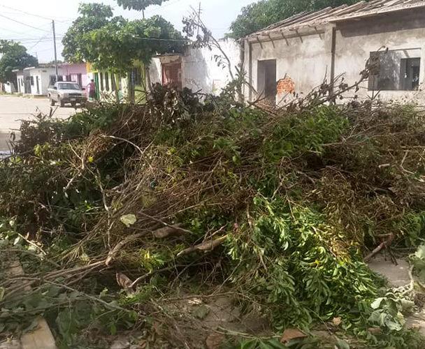 Vecinos del Istmo piden levantar la basura de poda de árboles