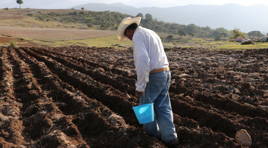 En Oaxaca, piden dar a pequeños productores  40% del presupuesto del campo | El Imparcial de Oaxaca