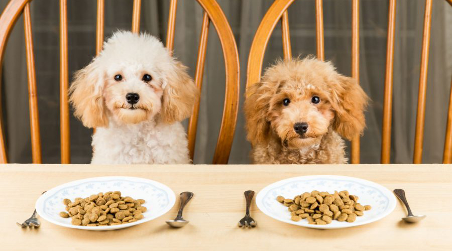 Suprema Corte avala aplicación del IVA a comida para mascotas | El Imparcial de Oaxaca