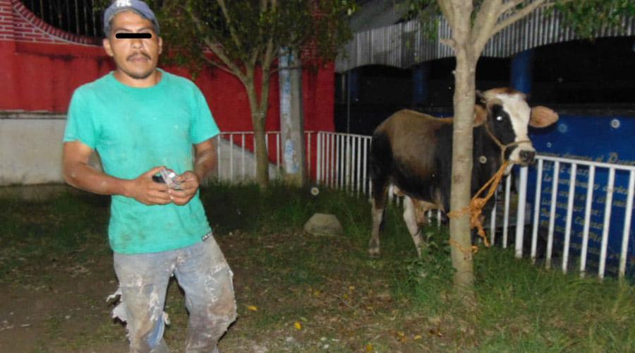 Detienen a presunto ratero de ganado en Chiquihuitlan | El Imparcial de Oaxaca