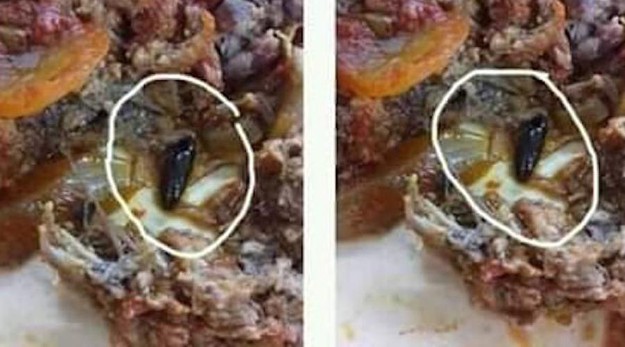 Denuncian estudiantes universitarios que en su comedor sirven comida con gusanos y cucarachas | El Imparcial de Oaxaca