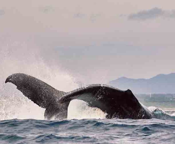 Arranca la temporada de avistamiento de ballenas