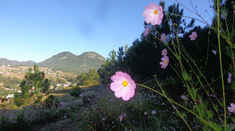 Oaxaca: rico en  recursos naturales