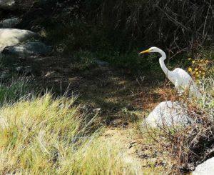 Reserva natural de Oaxaca,  opacada por la delincuencia