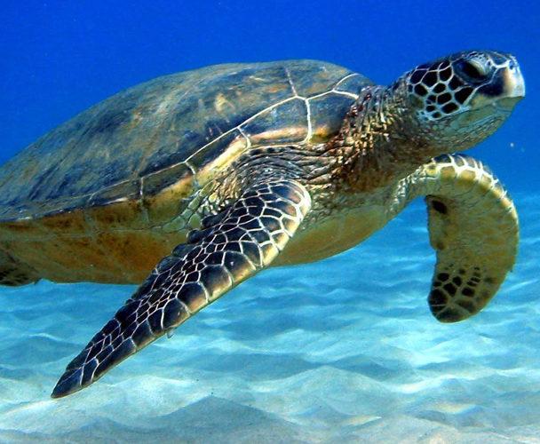 Santuario de las Tortugas registra gran año de desove