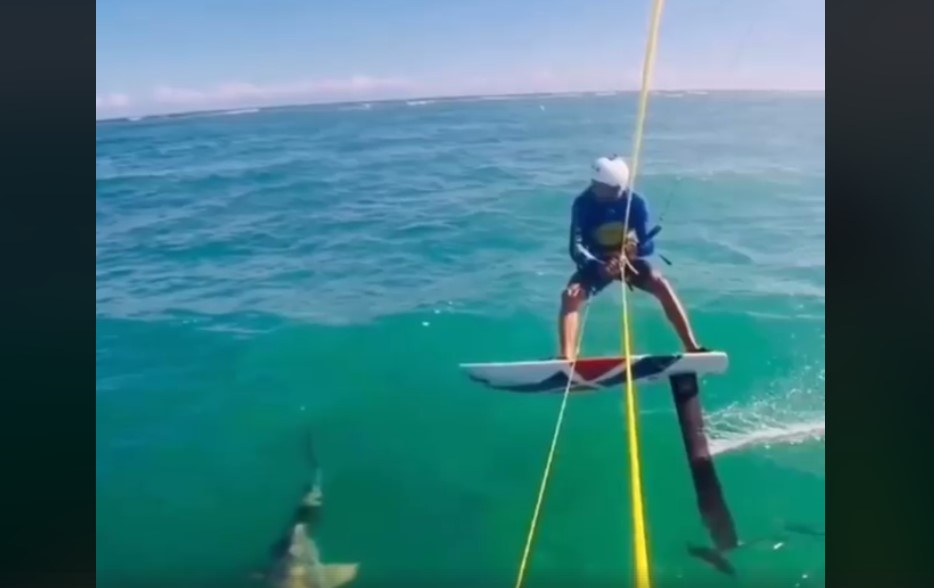 """Video: Surfista graba el momento exacto en que se """"tropieza"""" con un tiburón   El Imparcial de Oaxaca"""