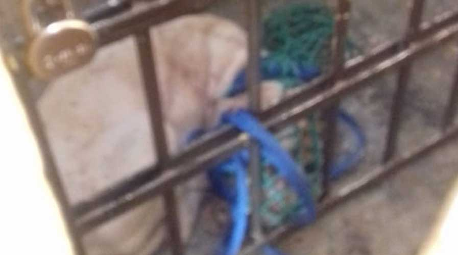 Resguardan a perro que mató a bebé en Lachigoló | El Imparcial de Oaxaca