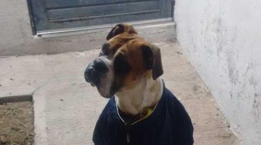 Exigen justicia para perro que fue torturado con pirotecnia | El Imparcial de Oaxaca