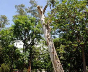 Olvidados espacios verdes en Oaxaca