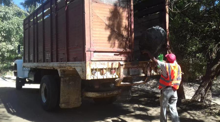 Zopilote Costeño se aprovecha  de la recolección de basura | El Imparcial de Oaxaca