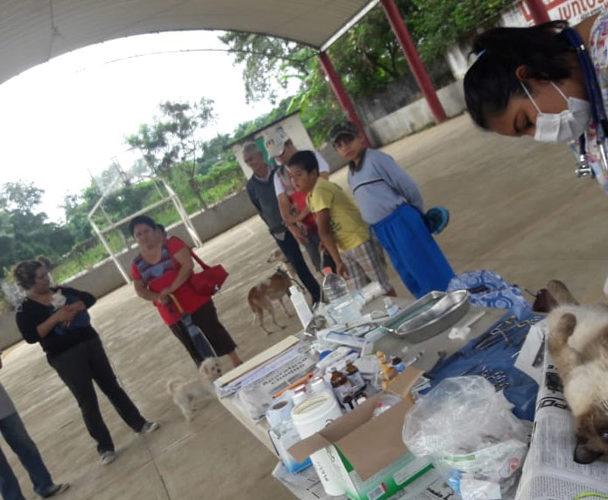 Implementan campaña de esterilización canina y felina en Tuxtepec, Oaxaca