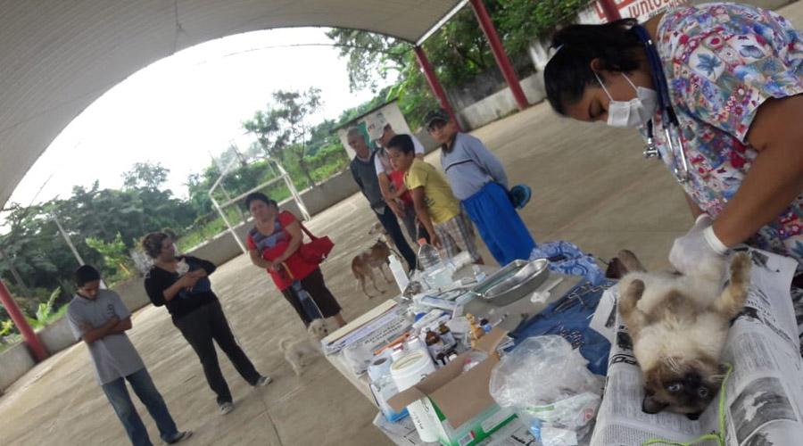 Implementan campaña de esterilización canina y felina en Tuxtepec, Oaxaca   El Imparcial de Oaxaca