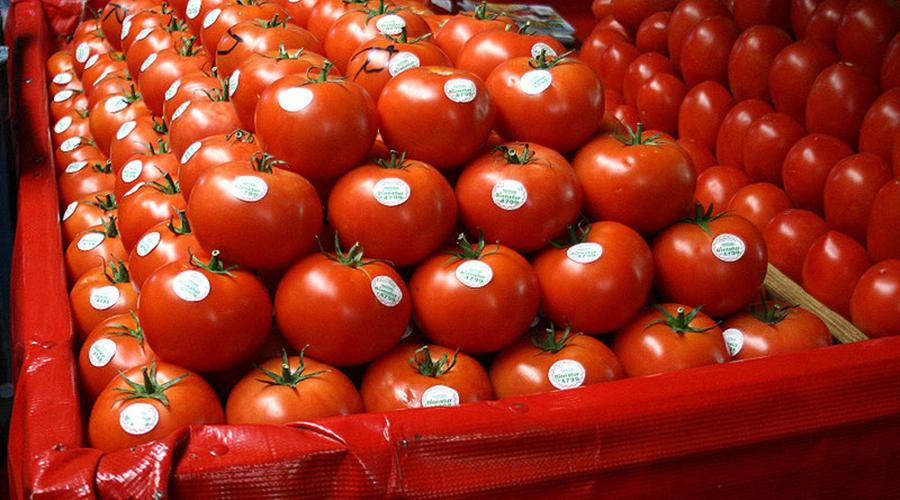 Productores de tomate pagarán más aranceles para exportarlo a EU   El Imparcial de Oaxaca