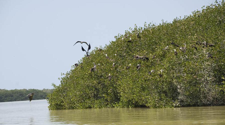 Huatulco, sitio Ramsar cumple 15 años   El Imparcial de Oaxaca