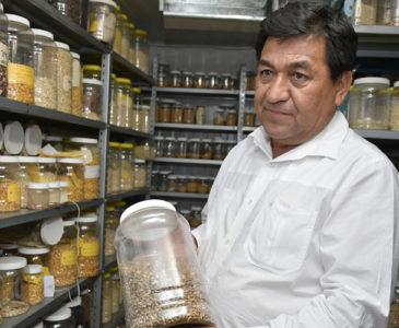 Preservan semillas nativas en bancos comunitarios