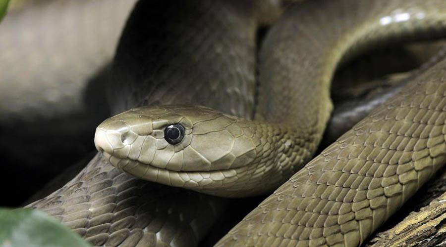 Video:  Un hombre arriesga su vida para salvar a una serpiente venenosa | El Imparcial de Oaxaca