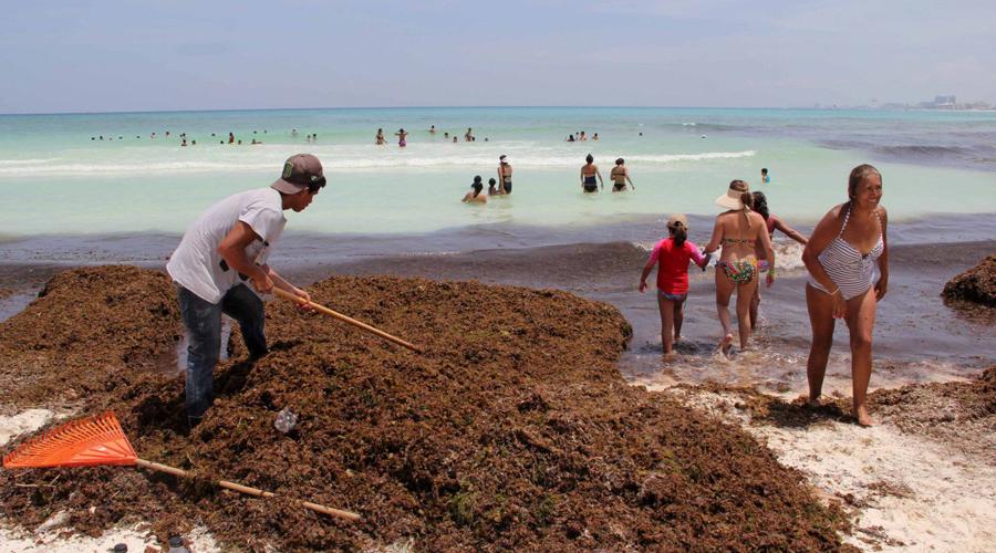 Sargazo que afecta playas mexicanas puede convertirse en papel | El Imparcial de Oaxaca
