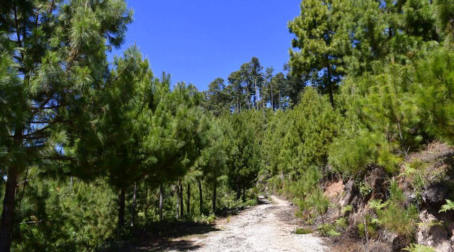 Cuidan riqueza de los bosques en San Pedro El Alto | El Imparcial de Oaxaca