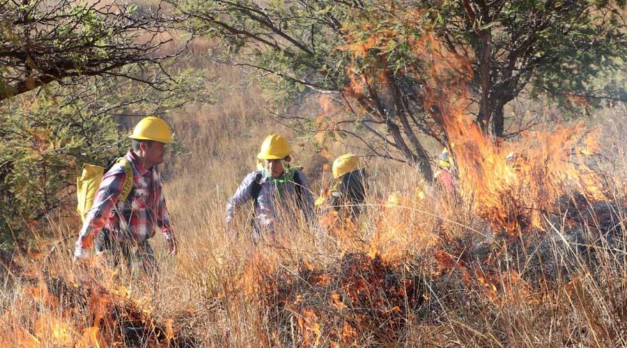 Suman 37 incendios forestales en Oaxaca | El Imparcial de Oaxaca