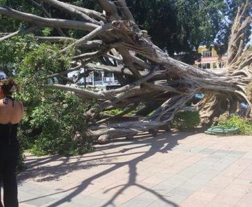 Fuertes vientos provocan caída de árboles e incendios en Huatulco