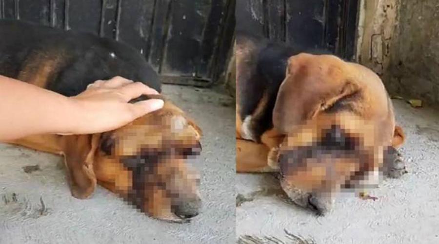 Video: ¡Indignante! Le sacan los ojos a un perrito en Puebla | El Imparcial de Oaxaca