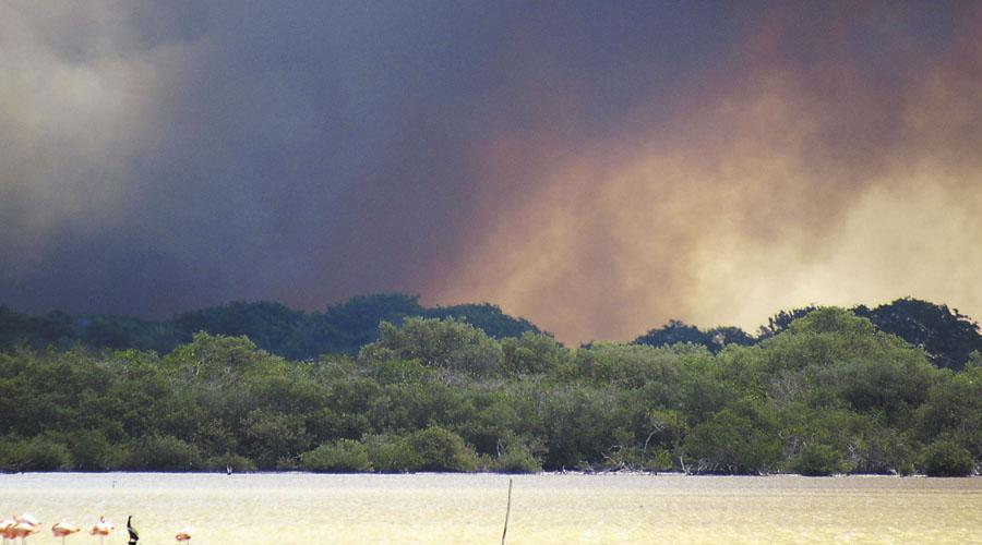 Video: Incendio consume con más de 200 hectáreas de manglares en Campeche | El Imparcial de Oaxaca
