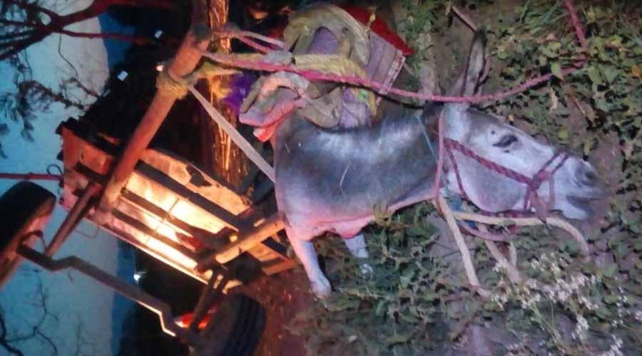 Muere burra tras ser embestida por camioneta en Zaachila