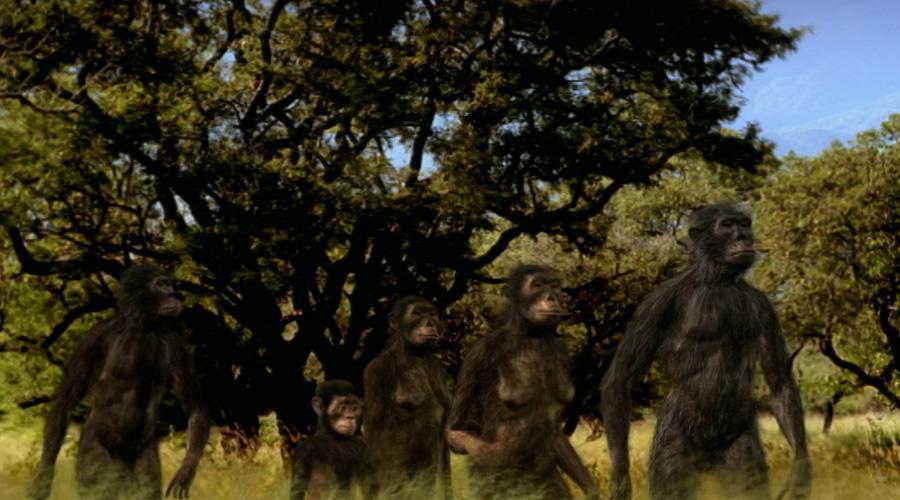Descubren nueva especie humana nunca antes estudiada   El Imparcial de Oaxaca