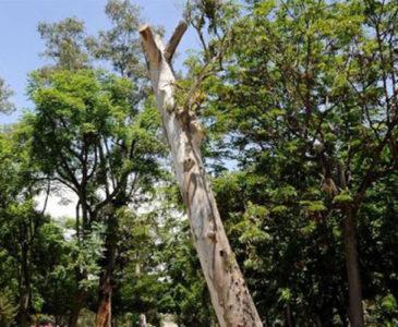 Impacta deforestación la biodiversidad de Oaxaca