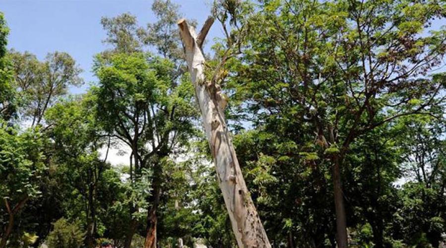 Impacta deforestación la biodiversidad de Oaxaca | El Imparcial de Oaxaca