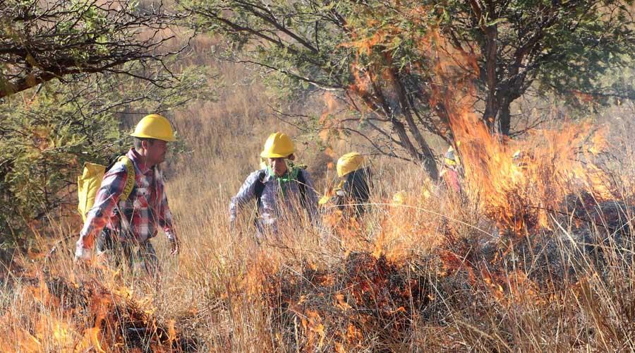 Se mantienen activos cinco incendios forestales en Oaxaca | El Imparcial de Oaxaca