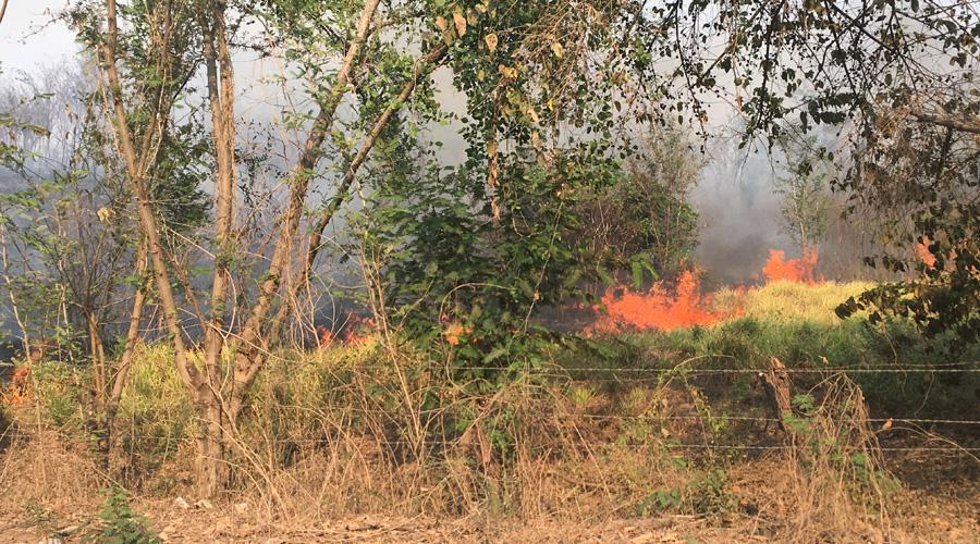 Incendios afectan la Costa de Oaxaca