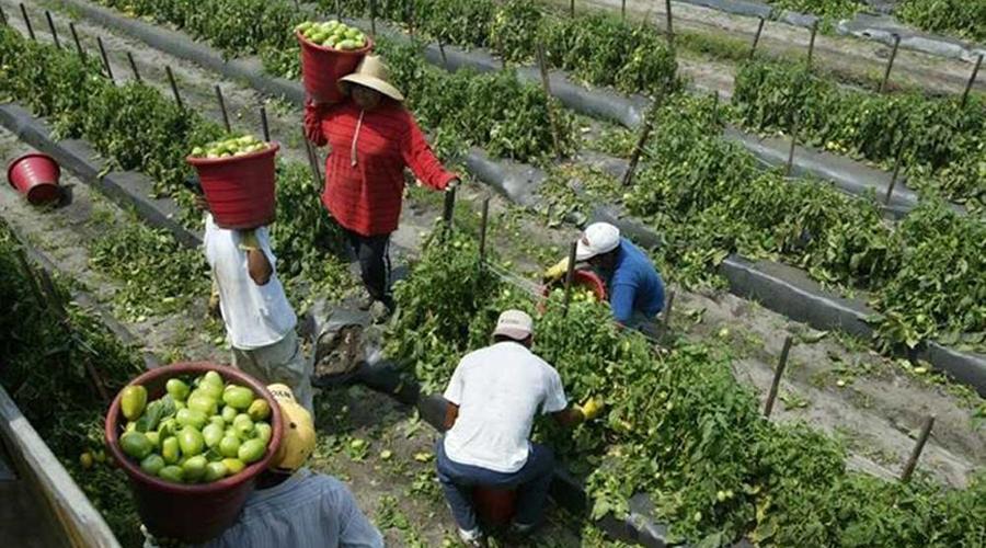Urge tecnificar el campo oaxaqueño   El Imparcial de Oaxaca