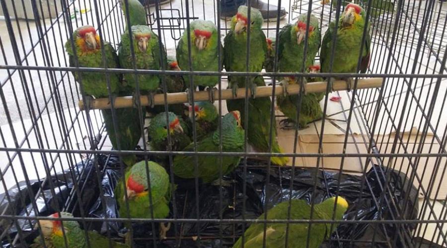 Aumenta tráfico de aves en Oaxaca | El Imparcial de Oaxaca