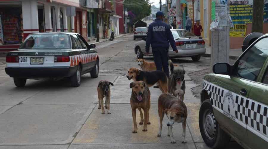 Preocupa maltrato a  mascotas en Huajuapan de León, Oaxaca