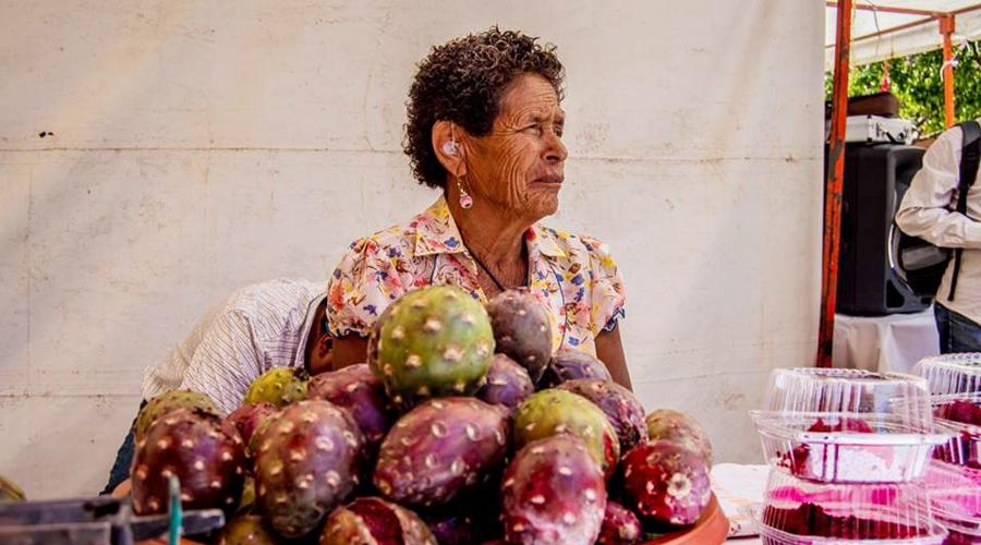 Productores de la Mixteca se preparan  para temporada de pitayas